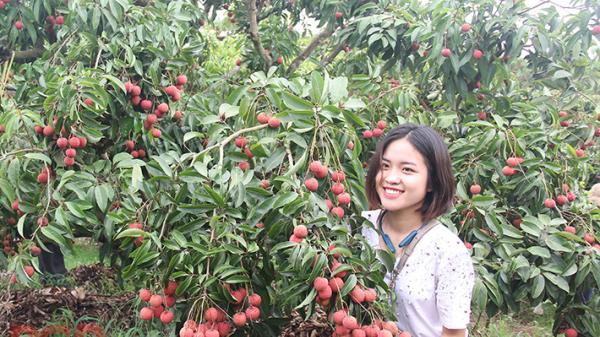 Bắc Giang: Phát triển tour du lịch mùa vải thiều huyện Lục Ngạn