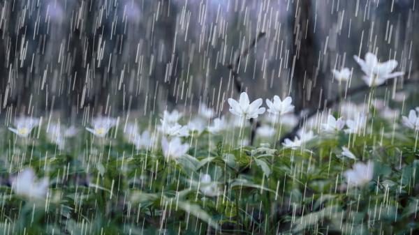 Thời tiết dịp thi tốt nghiệp THPT: Nhiều nơi mưa rào và dông mạnh