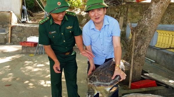 CLIP: Thả rùa biển 40kg về lại môi trường tự nhiên ở Hà Tĩnh