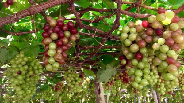 3 điểm du lịch nhất định phải đến cho những người mê trái cây trong tháng 7