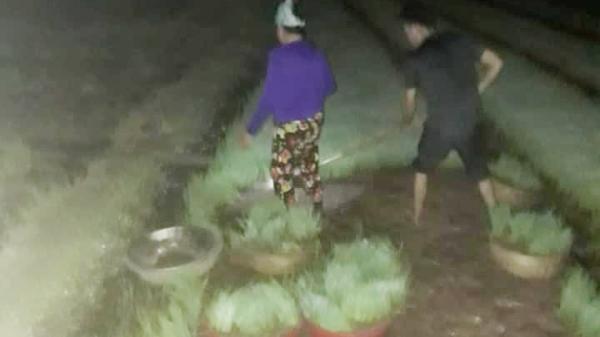 Nhìn cảnh các mẹ lọ mọ rọi đèn đi cấy giữa đêm để tránh cái nóng 40 độ này mới biết những bác nông dân vất vả thế nào