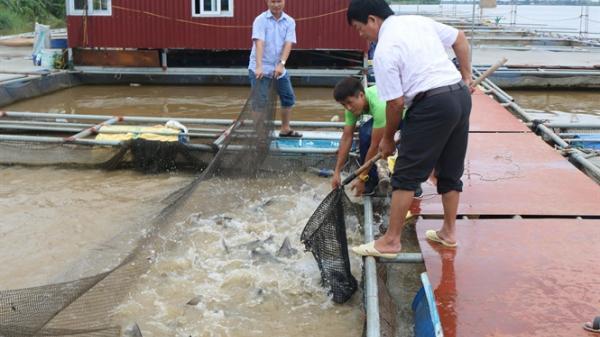 Nông dân Hưng Yên tích cực chủ động ứng phó trước cơn bão số 3