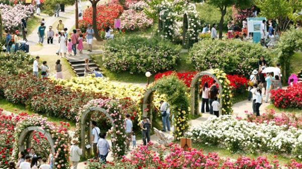 Không xa Hòa Bình có một công viên hoa hồng lớn nhất Việt Nam đẹp lung linh