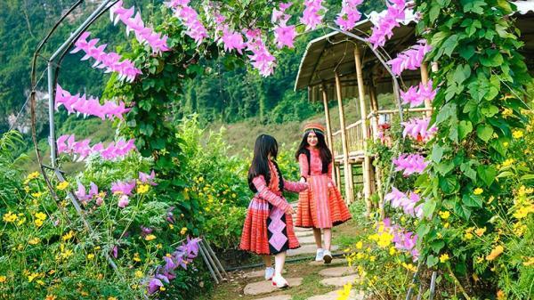 Rụng tim với thung lũng hoa NÚI ĐÁ TRẮNG có 1 – 0 – 2 ngay gần Yên Bái, hoa đang nở rộ đón khách dịp lễ 2/9