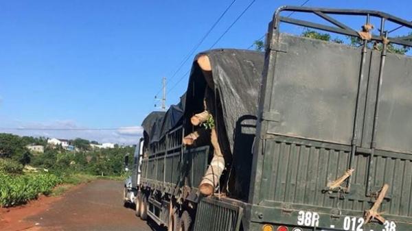 Phát hiện tài xế Bắc Giang chở cây đa 'khủng' không giấy tờ trên đường