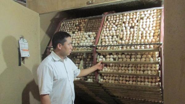 Chuyện hiếm gặp một thôn thu 16 tỷ đồng từ nuôi gà sinh sản ở Hưng Yên