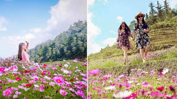 Giới trẻ 'phát sốt' với vườn hoa cánh bướm đẹp ngẩn ngơ ở Sapa