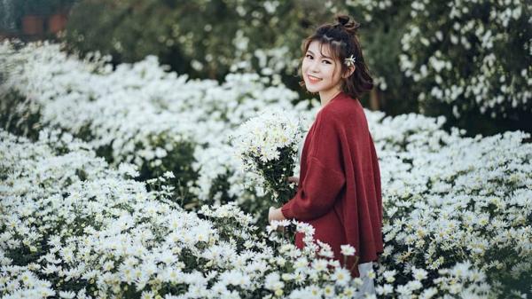 """10x Sơn La khoe vẻ đẹp tươi tắn, nổi """"bần bật"""" giữa vườn cúc họa mi"""