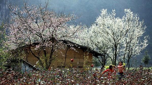 Tiết lộ những cảnh đẹp hút mắt hấp dẫn khách du lịch tương ứng với các tháng tại Sapa