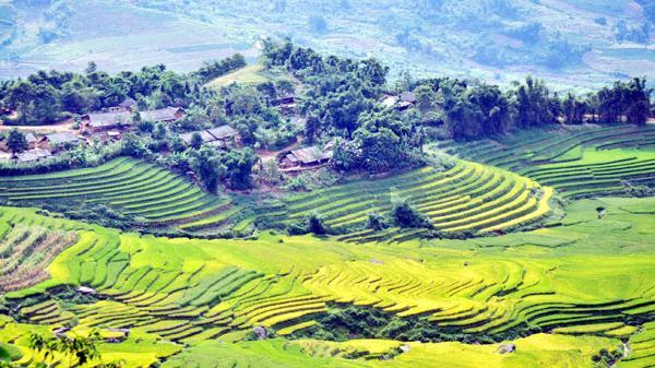 Du lịch - phượt Lào Cai: Mùa vàng đẹp ngất ngây trên vùng cao Bát Xát