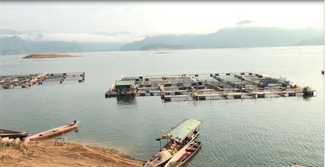 Dân tái định cư xã Chiềng Bằng, Sơn La giàu lên từ nghề nuôi cá lồng bè trên hồ thủy điện