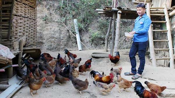 Mai Sơn, Sơn La: Bí thư Chi đoàn làm kinh tế giỏi