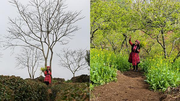 Sơn La: Ấn tượng khó phai về mùa hoa trên bản Phiêng Cành