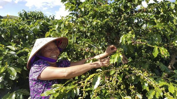 Ngoài 16 loại nông sản được cấp văn bằng bảo hộ, còn nhiều đặc sản chỉ Sơn La mới có