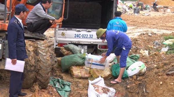 Lào Cai: T.iêu h.ủy gần 800 tạ thực phẩm đông lạnh đang p.hân h.ủy