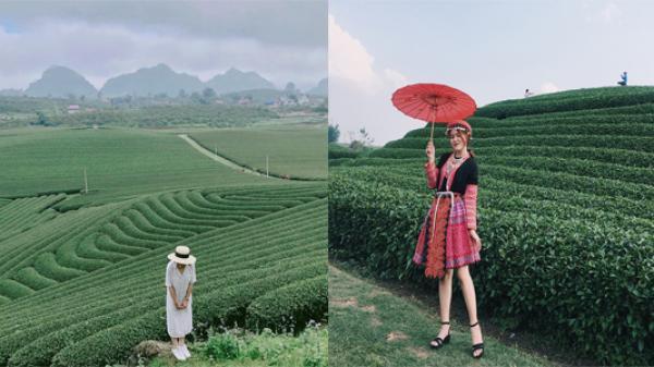 Sơn La và 6 đồi chè 'sống ảo' đỉnh cao dành cho dân thích xê dịch ở Việt Nam