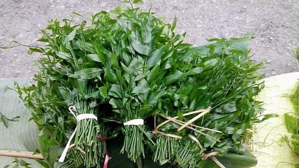 Rau sắng: Món rau đặc biệt của giới nhà giàu đắt ngang ngửa tôm hùm bổ dưỡng như thế nào?