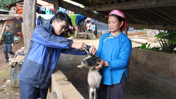 Mường Khương (Lào Cai) cơ bản khống chế được bệnh lở mồm, long móng