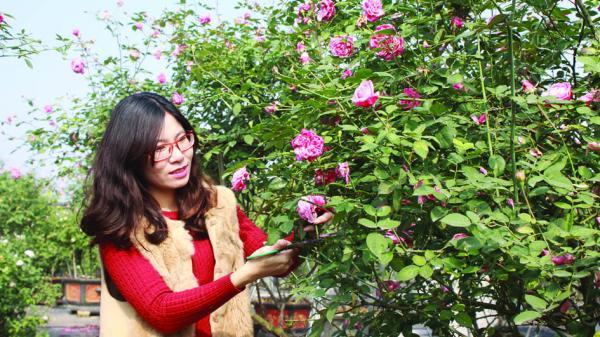 Khu vườn hồng cổ Sa Pa mê hoặc của 'tỷ phú sắc hương'