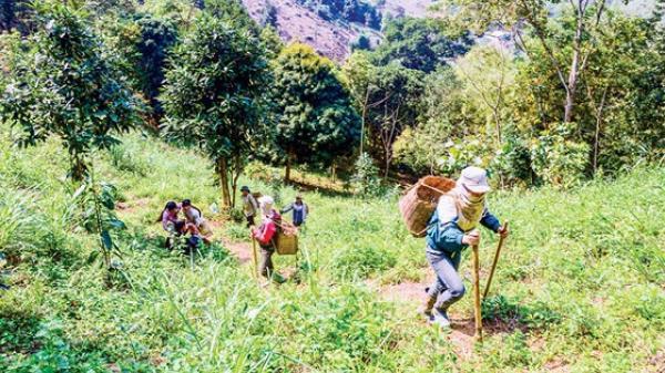 """Sơn La: Theo chân người Dao đi s.ăn """"lộc"""" rừng"""