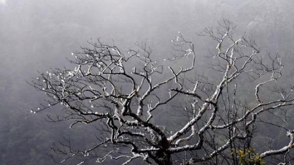 Không khí lạnh tăng cường, Mộc Châu (Sơn La)  tụt xuống 13,4 độ C