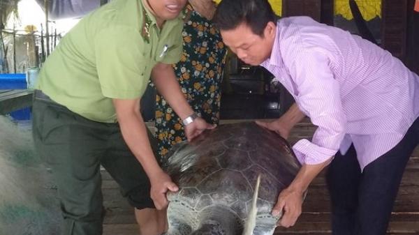 Cà Mau: Ngư dân bàn giao rùa quý hiếm