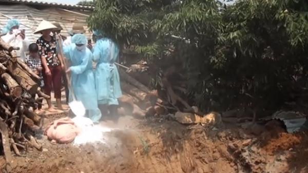 Sơn La: Huyện thứ 3 xuất hiện d.ịch tả lợn châu Phi