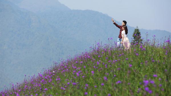Khám phá triền hoa tím đẹp như Provence ngay tại Fansipan