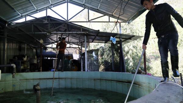 Nắng nóng gây nhiều t.hiệt hạ.i cho người nuôi cá hồi Sa Pa (Lào Cai)
