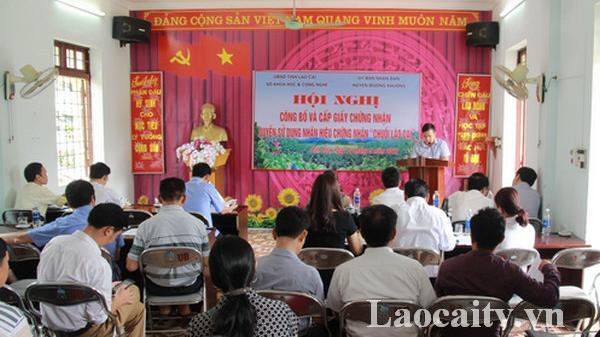 """Cấp giấy chứng nhận quyền sử dụng nhãn hiệu """"Chuối Lào Cai"""" cho nông dân Mường Khương"""