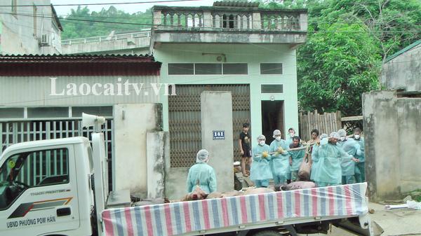 Thành phố Lào Cai phát hiện dịch tả lợn châu Phi