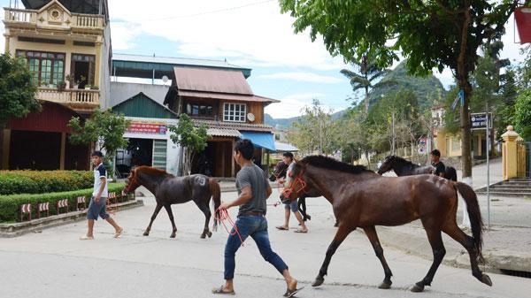 Giải đua ngựa truyền thống huyện Bắc Hà (Lào Cai) năm 2019 có cơ cấu giải thưởng lớn nhất từ trước đến nay