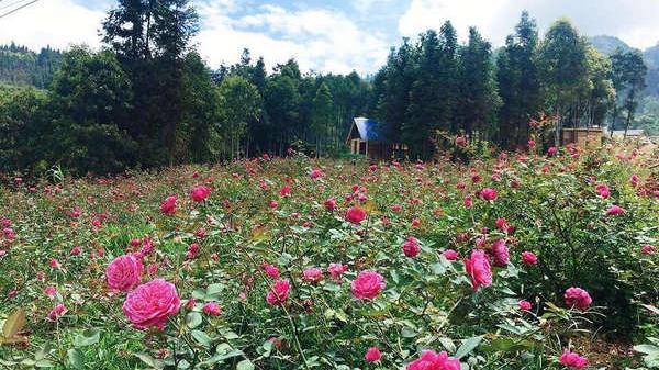 Cao nguyên trắng Bắc Hà (Lào Cai) mùa hạ muôn sắc hoa