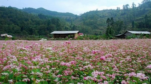 Lạc bước hồng hoang Tam Giác Mạch ở Lử Thẩn