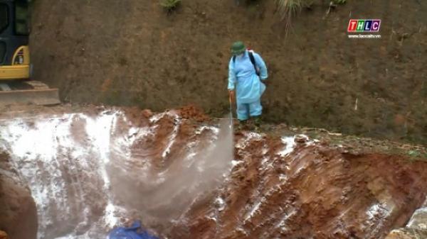 Lào Cai tiêu hủy trên 108 tấn lợn bị dịch tả lợn Châu Phi