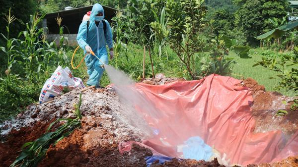 Cần sớm hỗ trợ người dân ở Lào Cai có lợn bị tiêu hủy do bệnh tả châu Phi