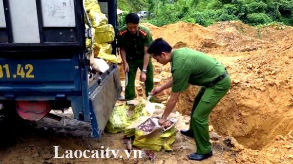 Lào Cai: Bắt giữ và tiêu hủy ngay 4.600 kg móng giò lợn
