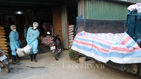 Mường Khương (Lào Cai) tiêu hủy trên 3.600 con lợn do bệnh dịch tả lợn châu Phi