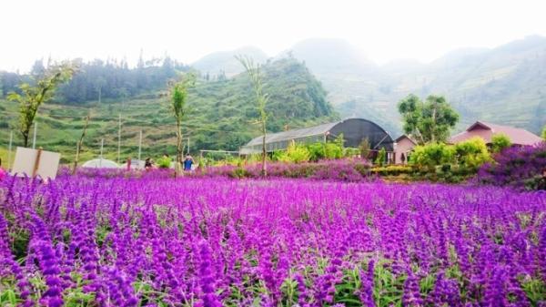 Nhiệt độ tại Bắc Hà (Lào Cai) giảm đến 13,8 độ C