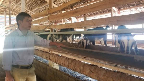 Chủ trang trại ở Lào Cai bất lực nhìn đàn dê chê't thảm ngay giữa khu công nghiệp