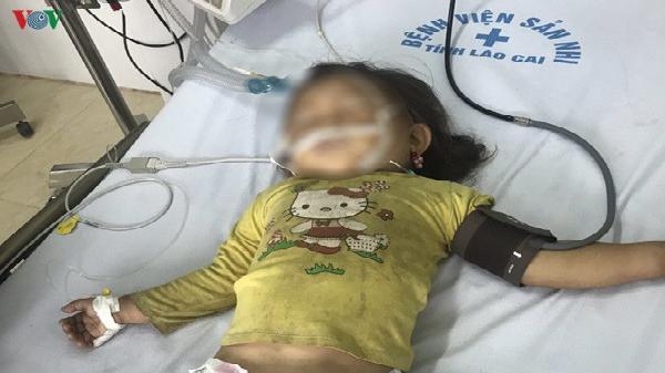 Cháu bé 3 tuổi ở Lào Cai bị ong đốt nguy kịch trên đường đi học về