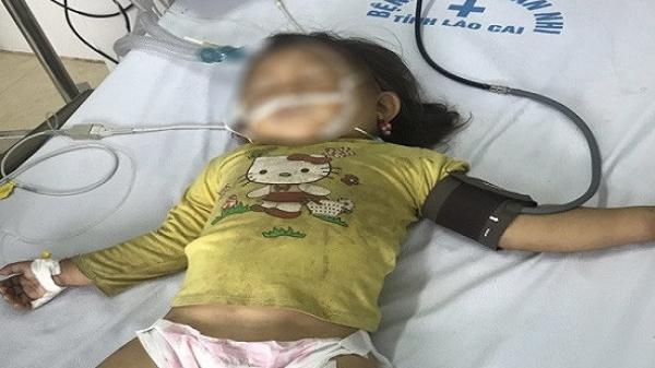 Bé 3 tuổi ở Lào Cai đã tử vong do ong đốt