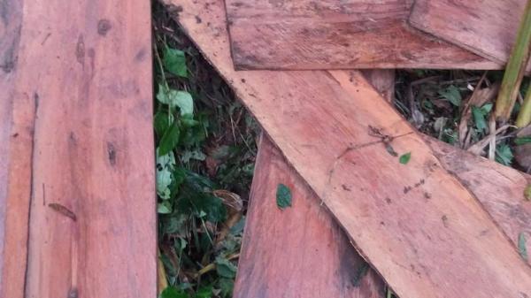 Lào Cai: Biết mà không ngăn nổi, Rừng Tả Phời bị phá tan nát