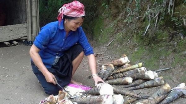 Người dân Lào Cai giàu lên nhờ loài cây dân dã