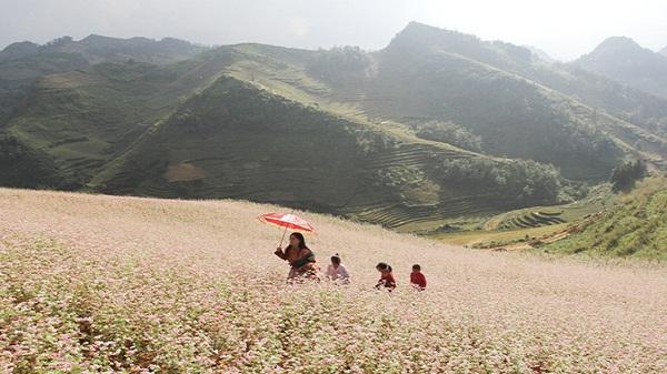 Ngât ngây miền hoa tam giác mạch Lào Cai