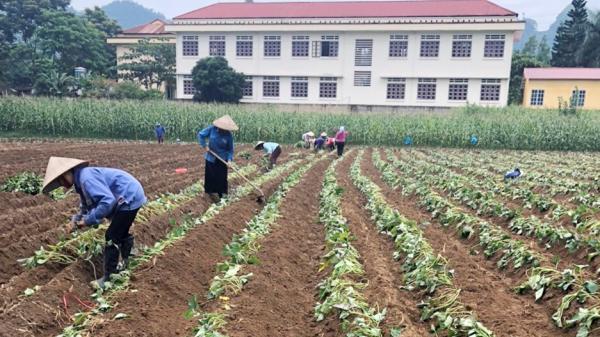 Văn Bàn (Lào Cai) phấn đấu trồng gần 1.900 ha cây vụ đông