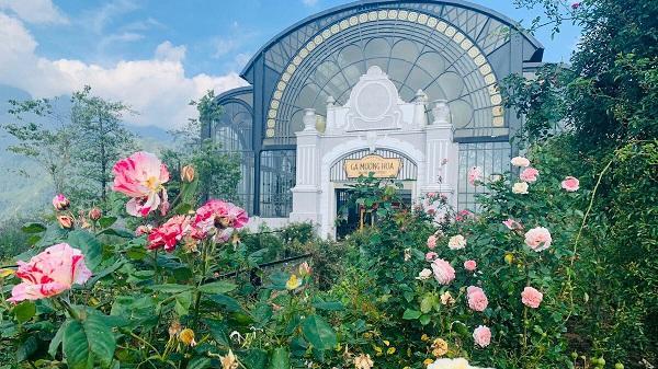 Chiêm ngưỡng thung lũng hoa hồng lớn nhất Việt Nam tại Lào Cai