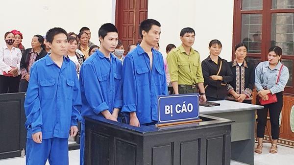 Lào Cai: Lĩnh án do phạm tội hủy hoại rừng