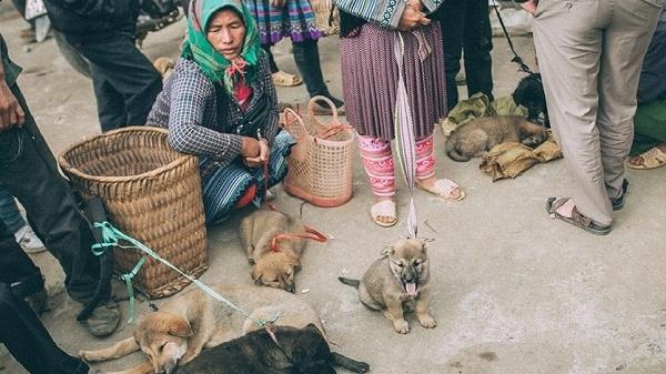 """Phiên chợ """"có một không hai"""" ở Lào Cai để săn lùng quốc khuyển"""