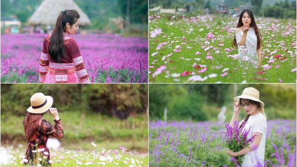 'Lịm tim' trước cánh đồng hoa oải hương tím biếc ở Lào Cai